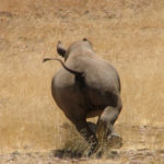 12 elephants, 45 rhinos poached in 2019 (Namibia)