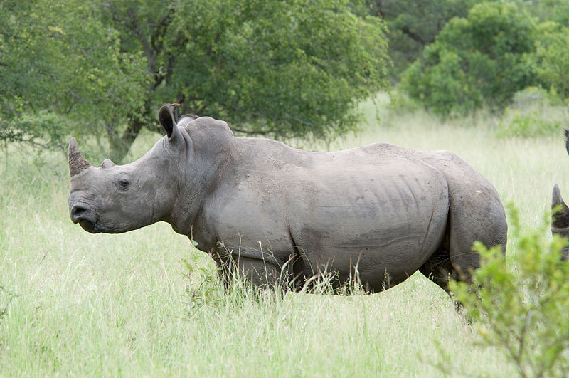 Rhino horn consumers in Vietnam do not trust demand reduction campaigns