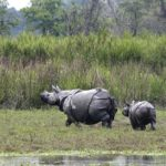 Assam: Mahouts, social workers in rhino horn smuggling net (India)