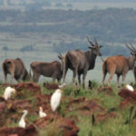 KZN Wildlife's future hangs in limbo despite 'action' promises from government (South Africa)