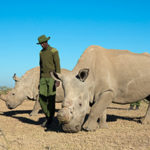 The Sunday Read: 'A mother and daughter at the end': The story of the last two northern white rhinos on earth
