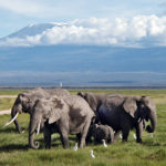 AWF to support transboundary conservation of iconic species