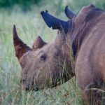 SANParks shocked at the killing of suspected rhino poaching kingpin (South Africa)