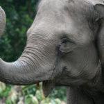 Ban on global wildlife trade a matter of survival in pandemic era