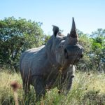 South African activists turn to radioactivity to stop rhino poaching