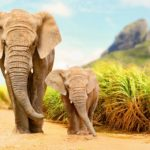 Poaching has long term impacts on elephants