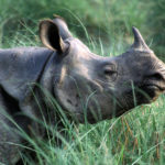 Assam to destroy nearly 2,500 rhino horns; to preserve few as exhibits