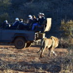 Conservation tourism in Africa brought to its knees by Covid-19 travel bans